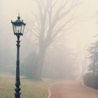 Tullio Stravisi: Vecchio parco, Villa Revoltella TS, 1993